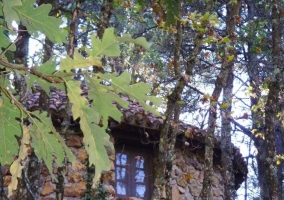Cabañas Casa Crisol