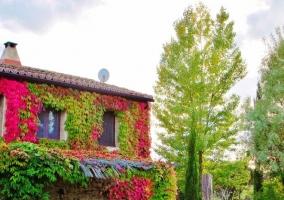 La Casa - El Corazón Verde