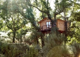 Cabaña Bosque- Dormir en los Árboles