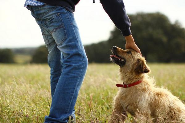 Rural properties that Dog Friendly